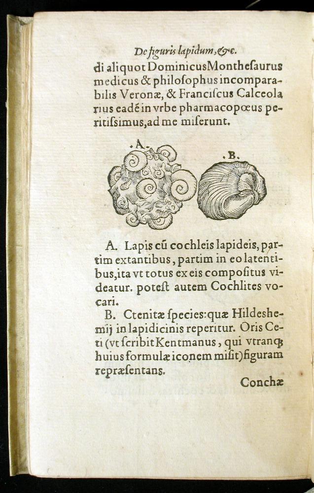 Image of Gesner-1565a-0165v