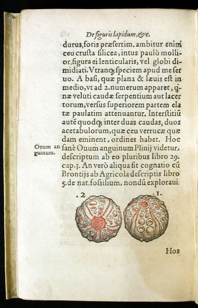 Image of Gesner-1565a-0168v