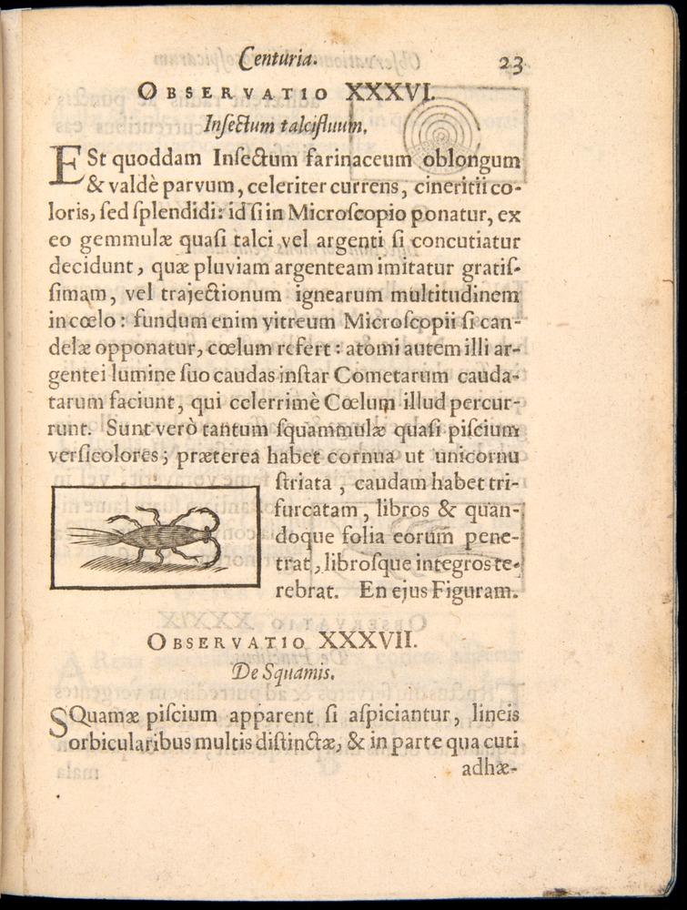 Image of Borel-1656-023