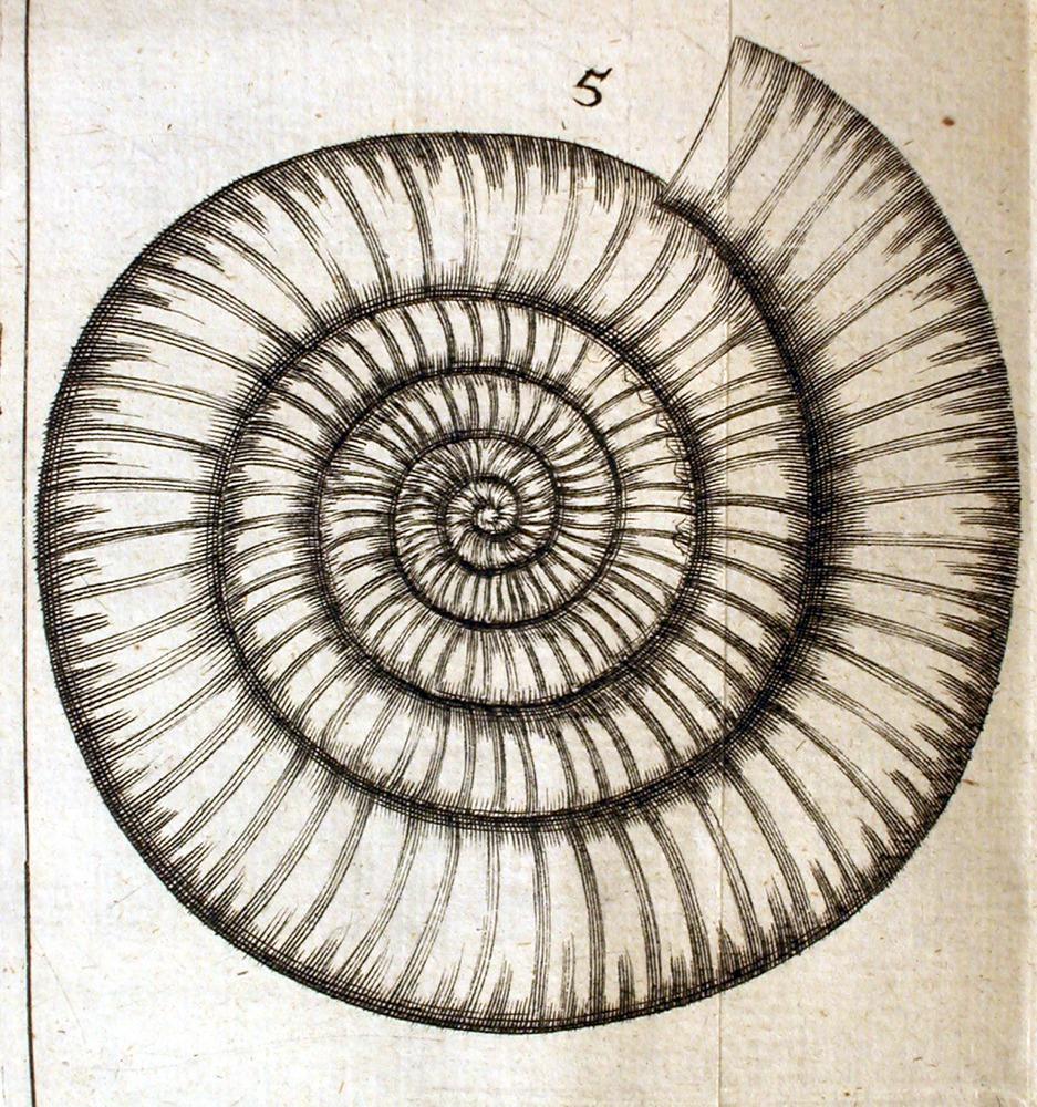 Image of Lister-1678-Ammonite