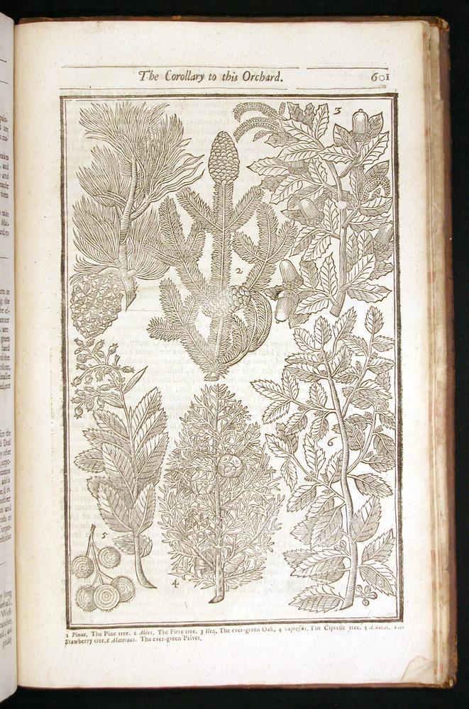Image of Parkinson-1656-601