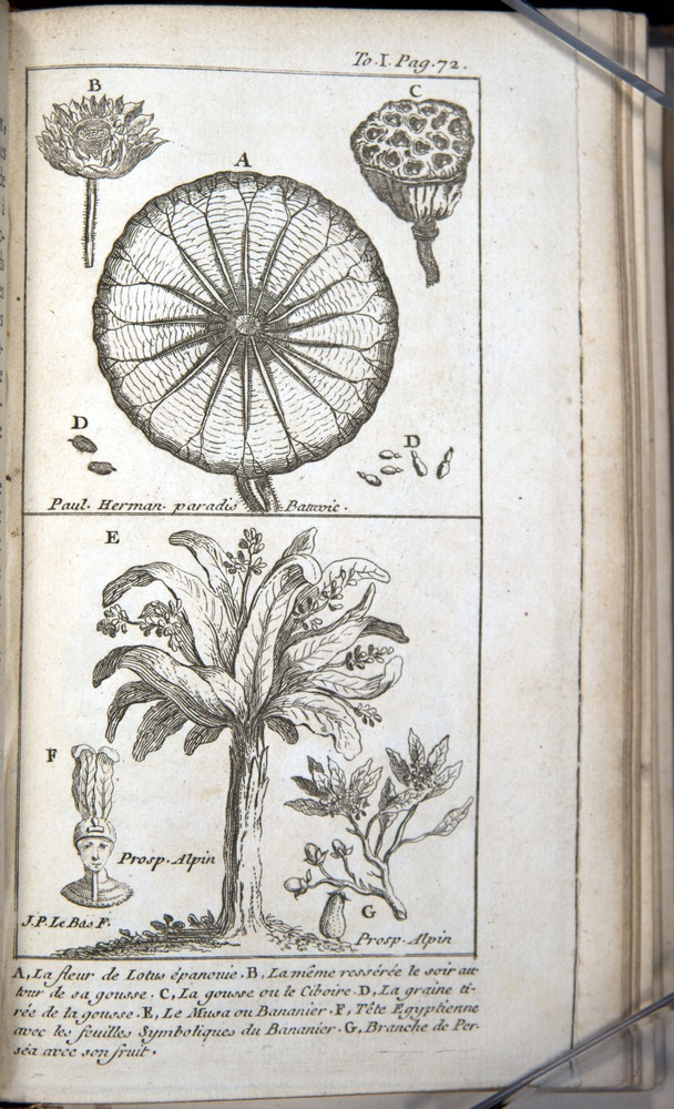 Image of Pluche-1739-v1-3373