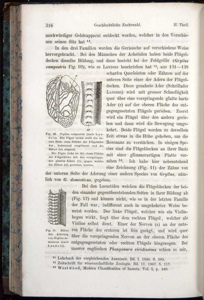 Image of Darwin-F1065.1-1871-00316