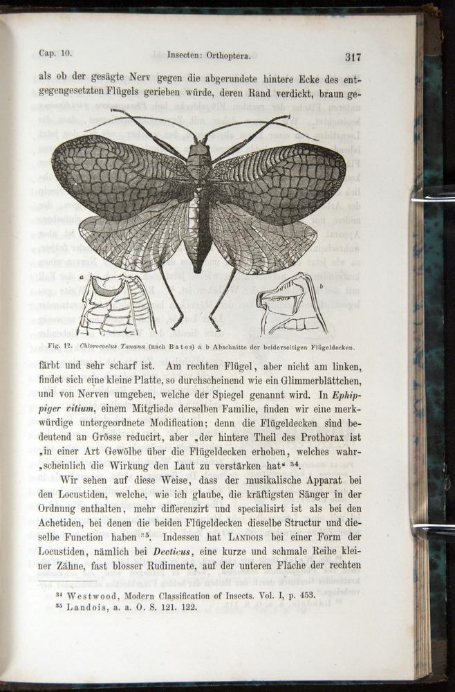 Image of Darwin-F1065.1-1871-00317