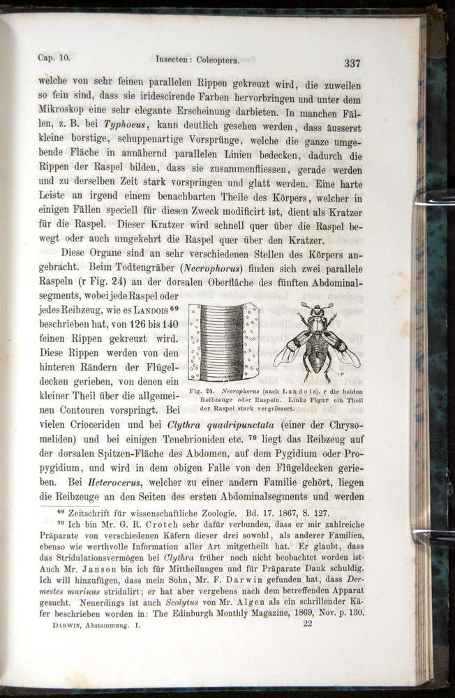 Image of Darwin-F1065.1-1871-00337