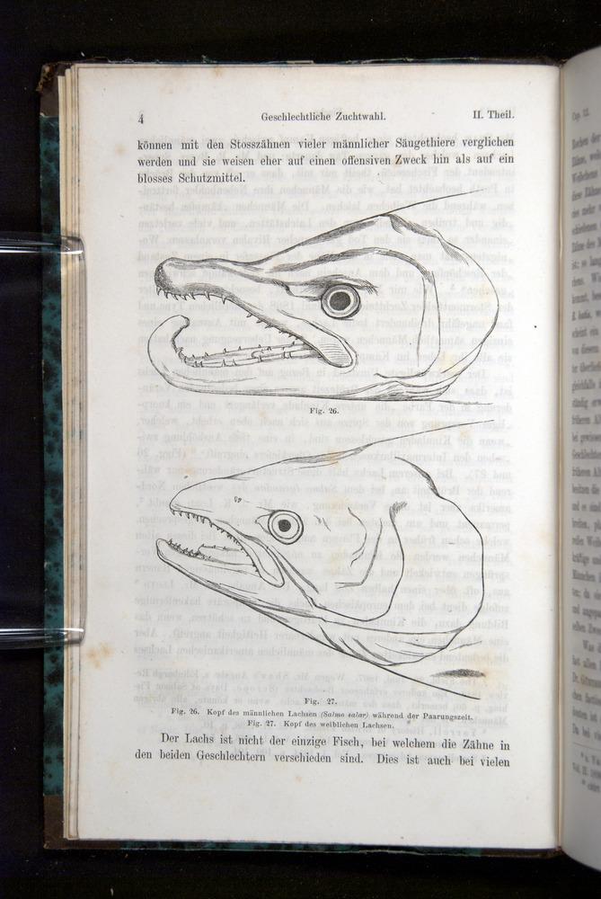 Image of Darwin-F1065.2-1871-004