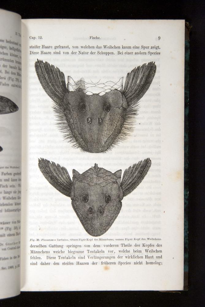 Image of Darwin-F1065.2-1871-009