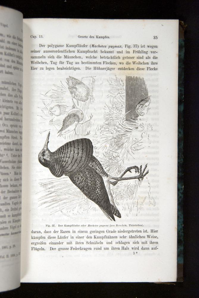 Image of Darwin-F1065.2-1871-035