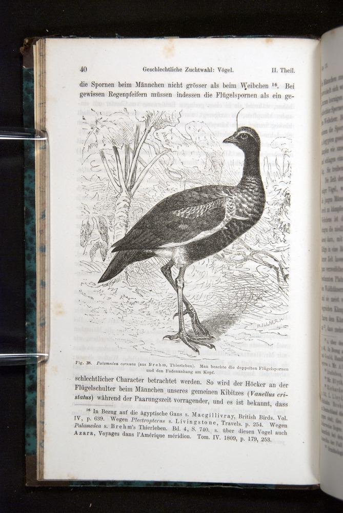 Image of Darwin-F1065.2-1871-040