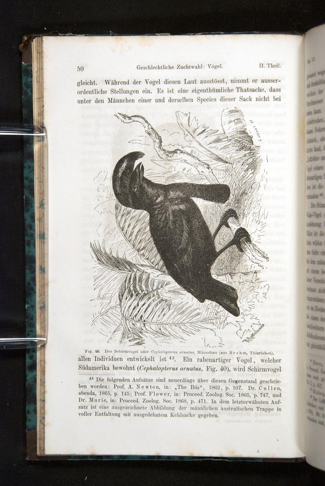 Image of Darwin-F1065.2-1871-050
