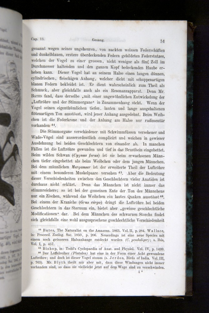 Image of Darwin-F1065.2-1871-051