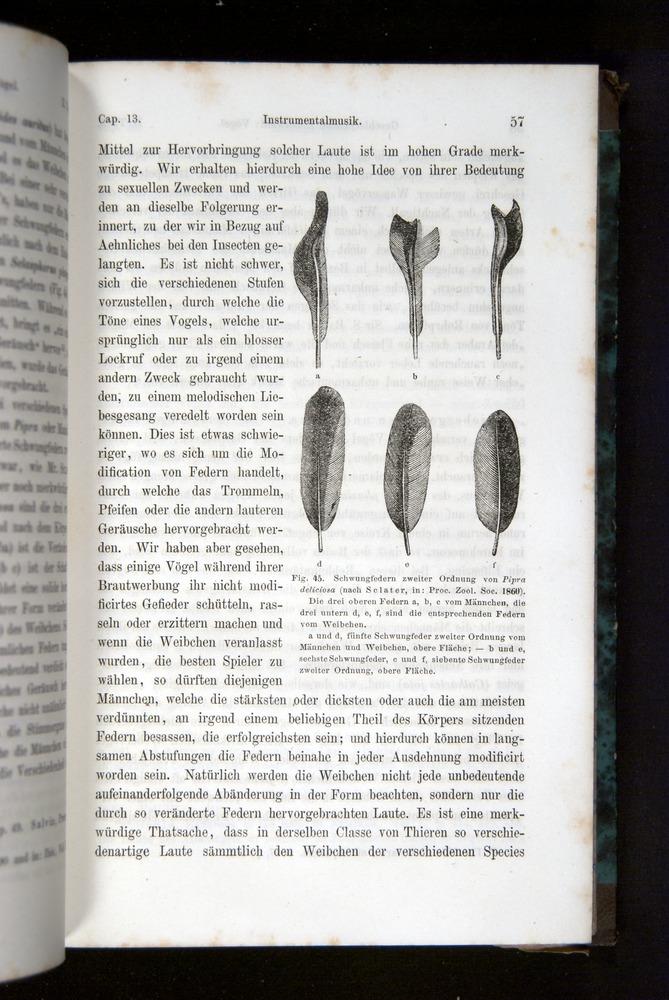 Image of Darwin-F1065.2-1871-057