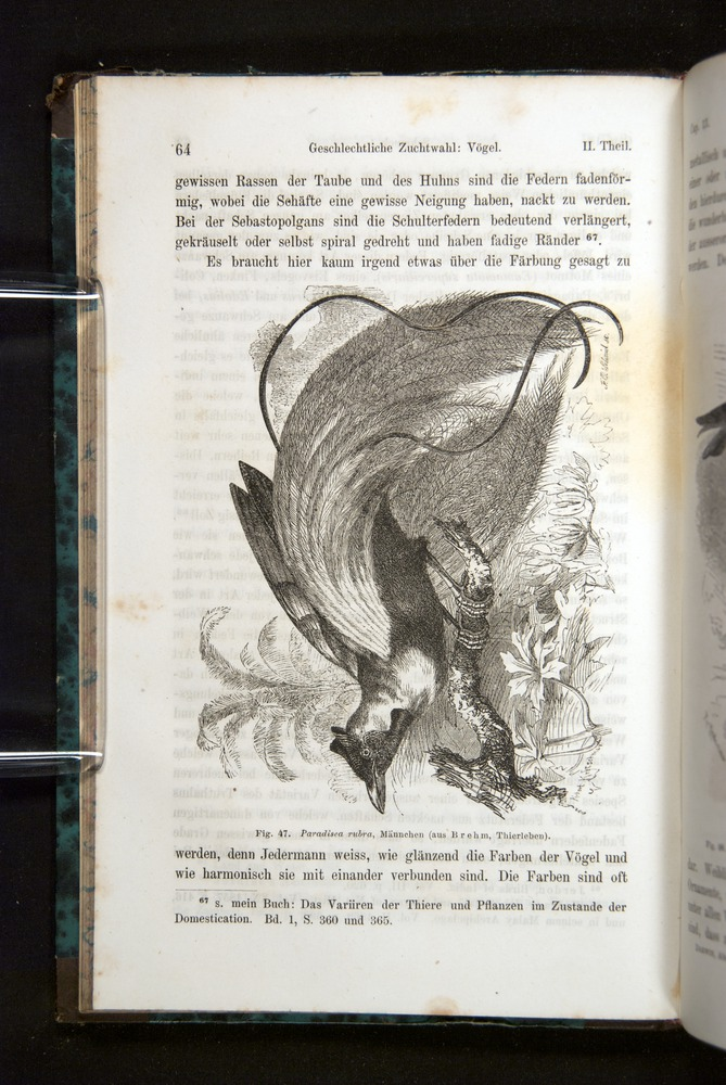 Image of Darwin-F1065.2-1871-064