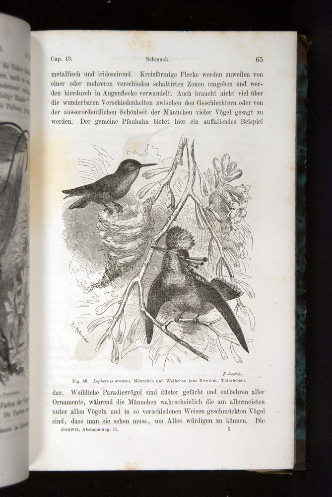 Image of Darwin-F1065.2-1871-065