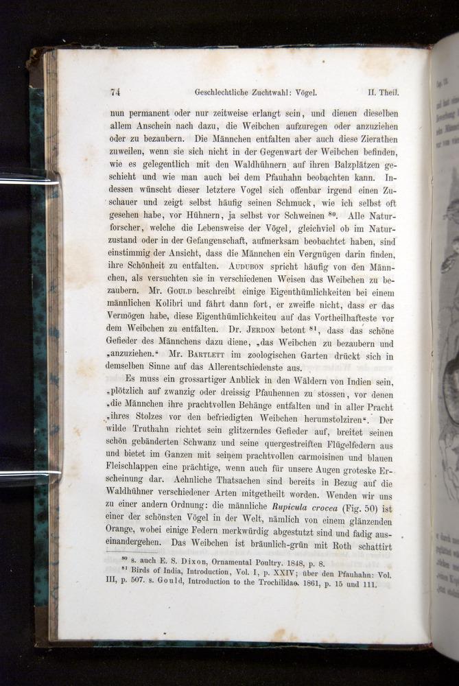 Image of Darwin-F1065.2-1871-074