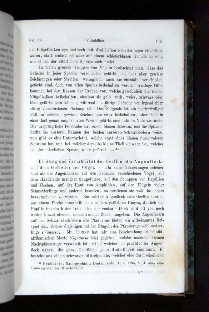 Image of Darwin-F1065.2-1871-115