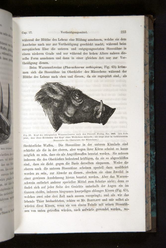 Image of Darwin-F1065.2-1871-233