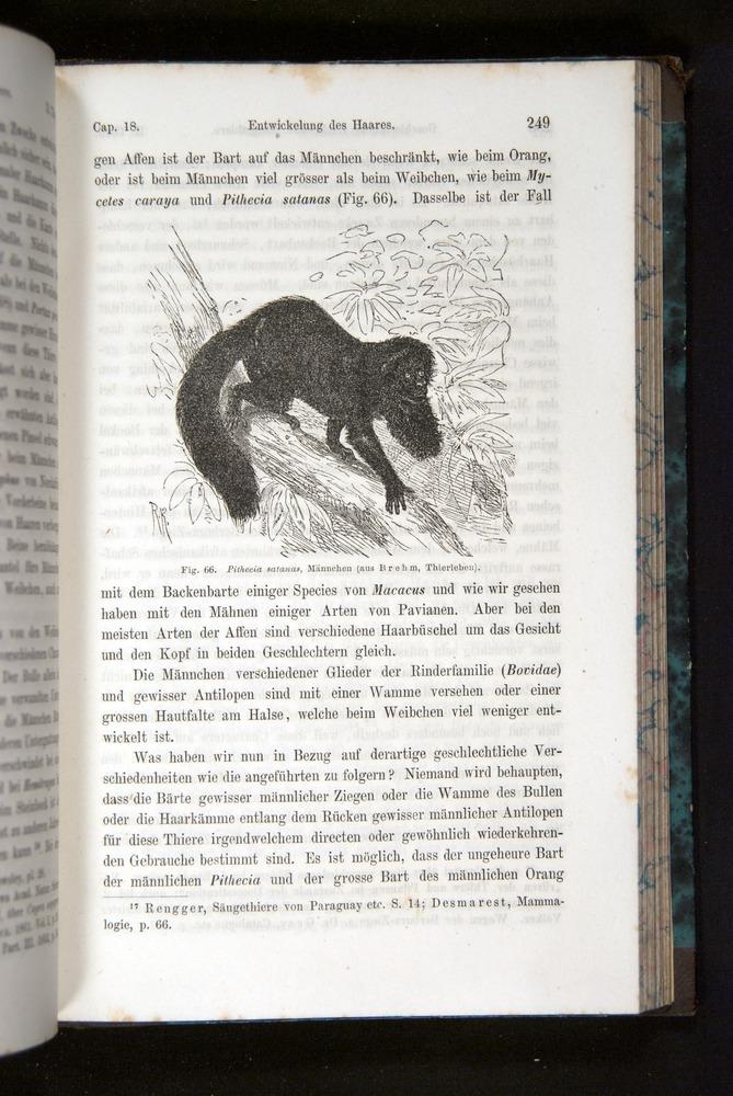 Image of Darwin-F1065.2-1871-249