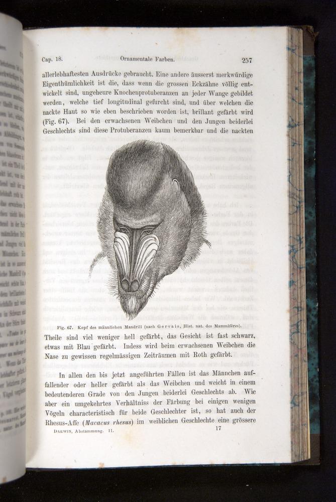 Image of Darwin-F1065.2-1871-257