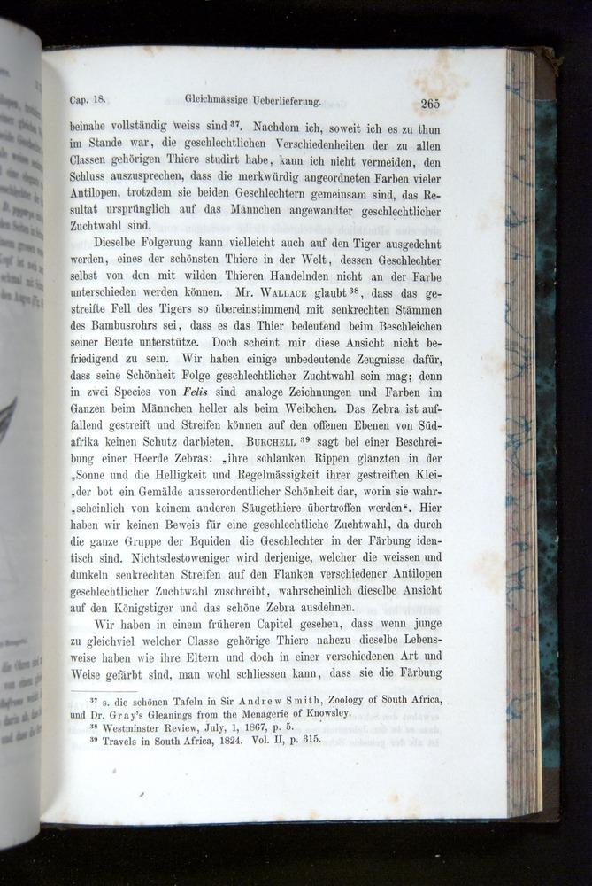 Image of Darwin-F1065.2-1871-265