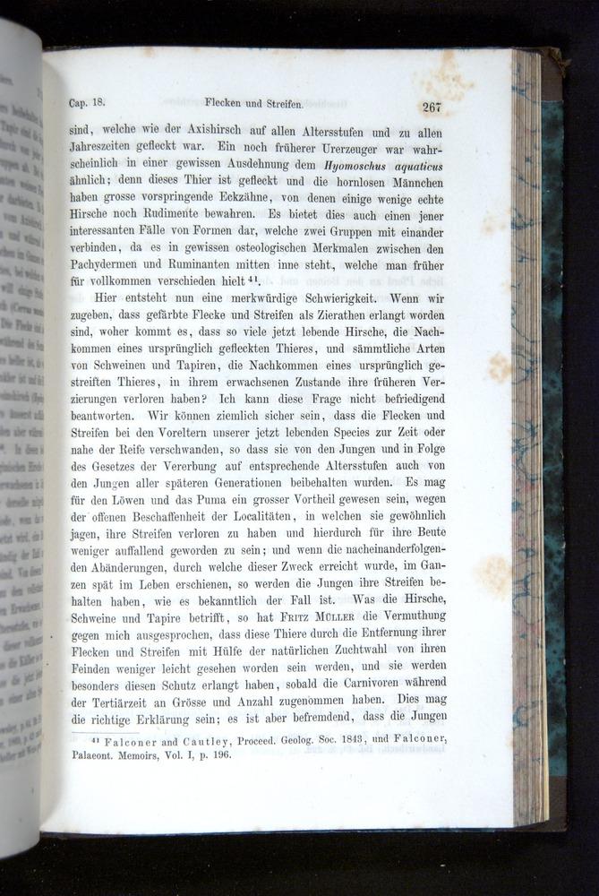 Image of Darwin-F1065.2-1871-267