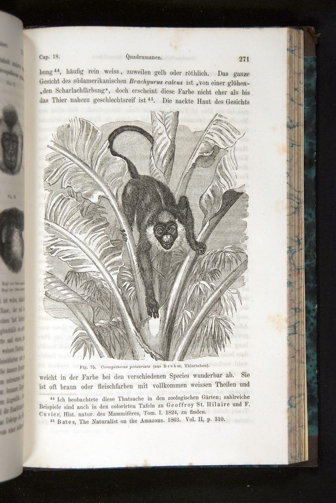 Image of Darwin-F1065.2-1871-271