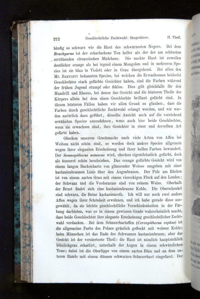 Image of Darwin-F1065.2-1871-272