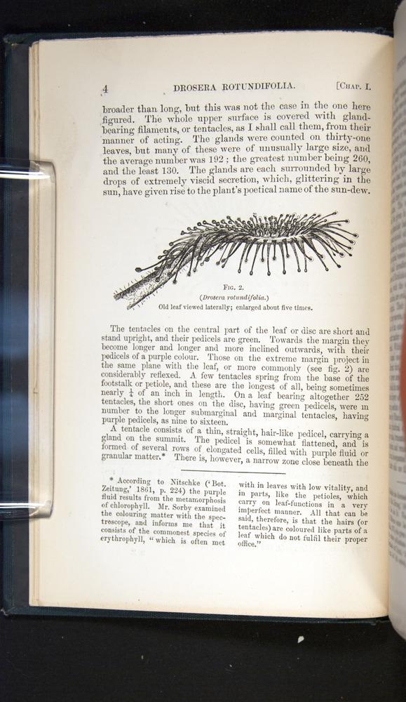 Image of Darwin-F1225-1888-004