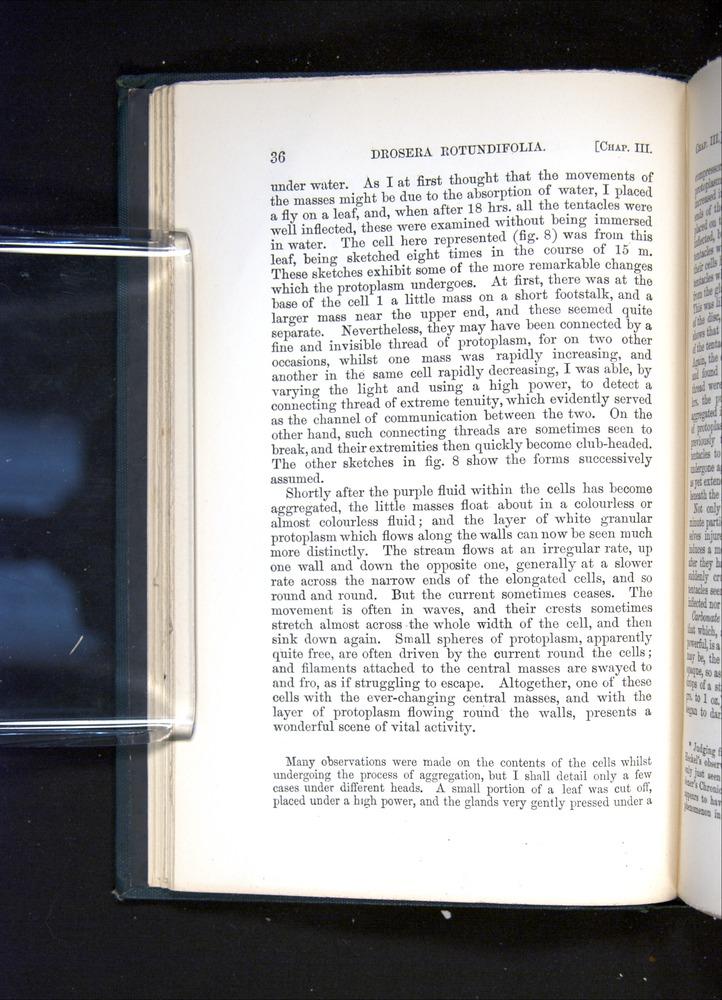 Image of Darwin-F1225-1888-036