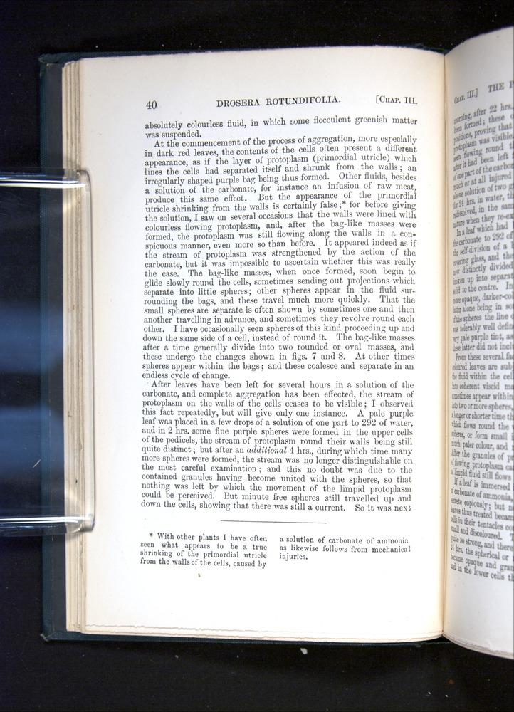 Image of Darwin-F1225-1888-040