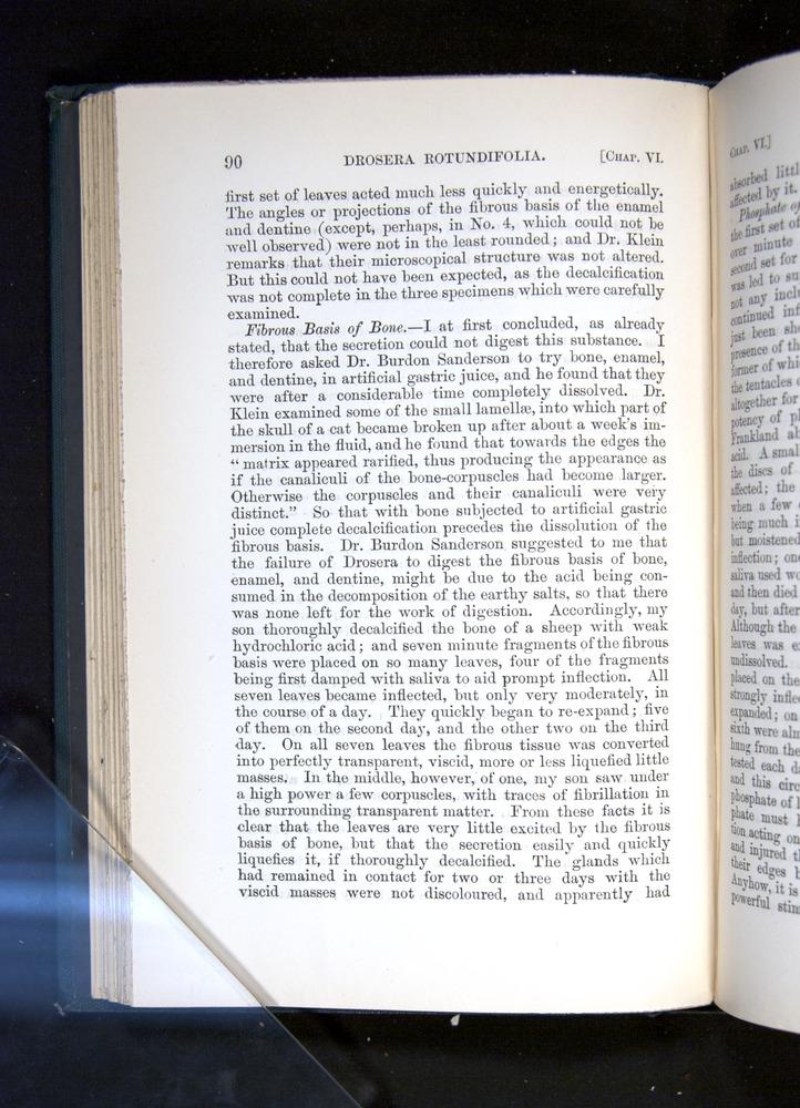Image of Darwin-F1225-1888-090