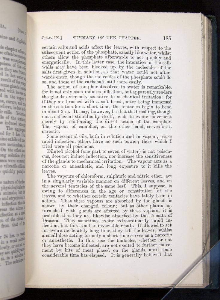 Image of Darwin-F1225-1888-185
