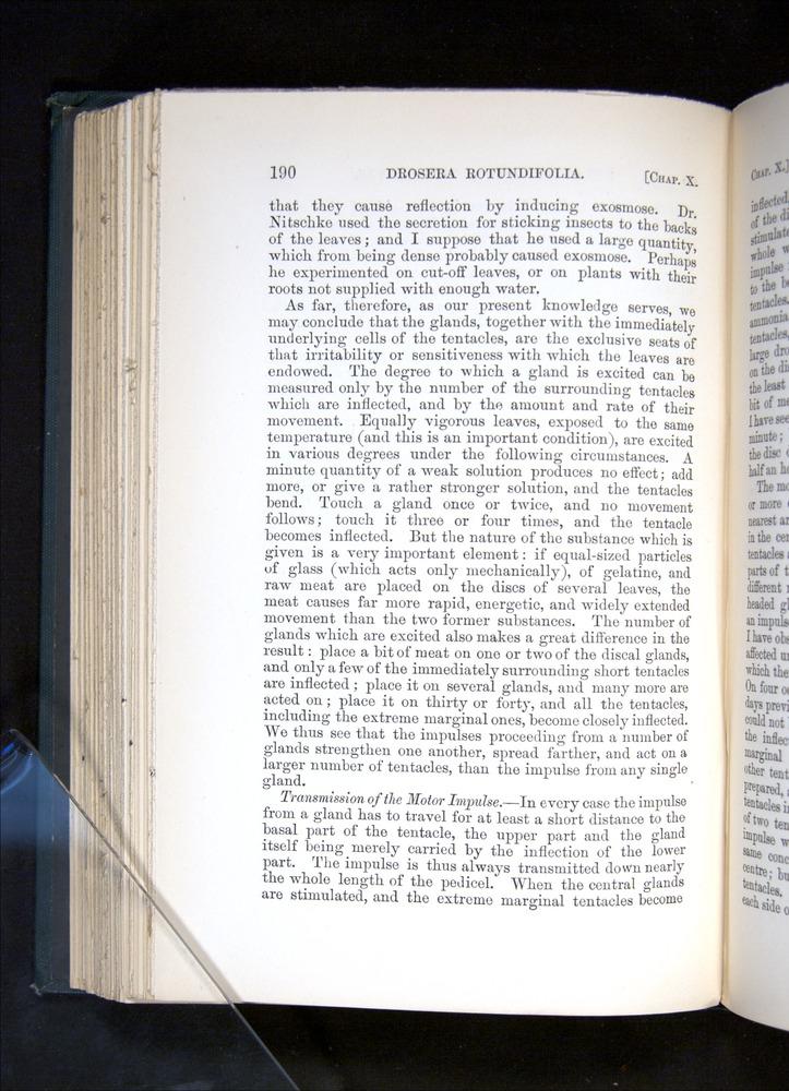 Image of Darwin-F1225-1888-190