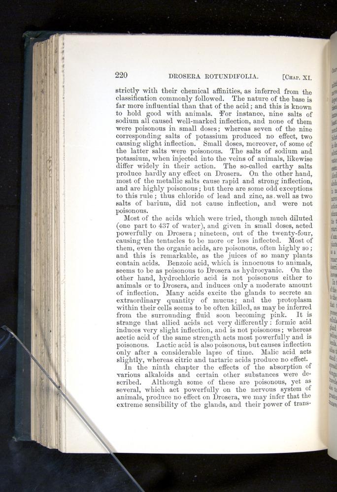 Image of Darwin-F1225-1888-220