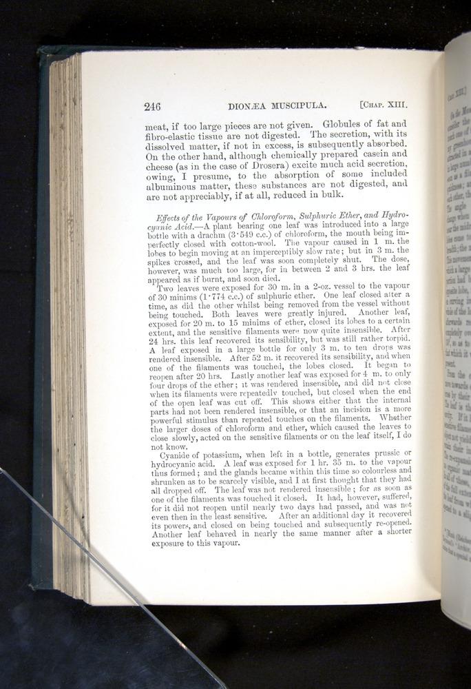 Image of Darwin-F1225-1888-246