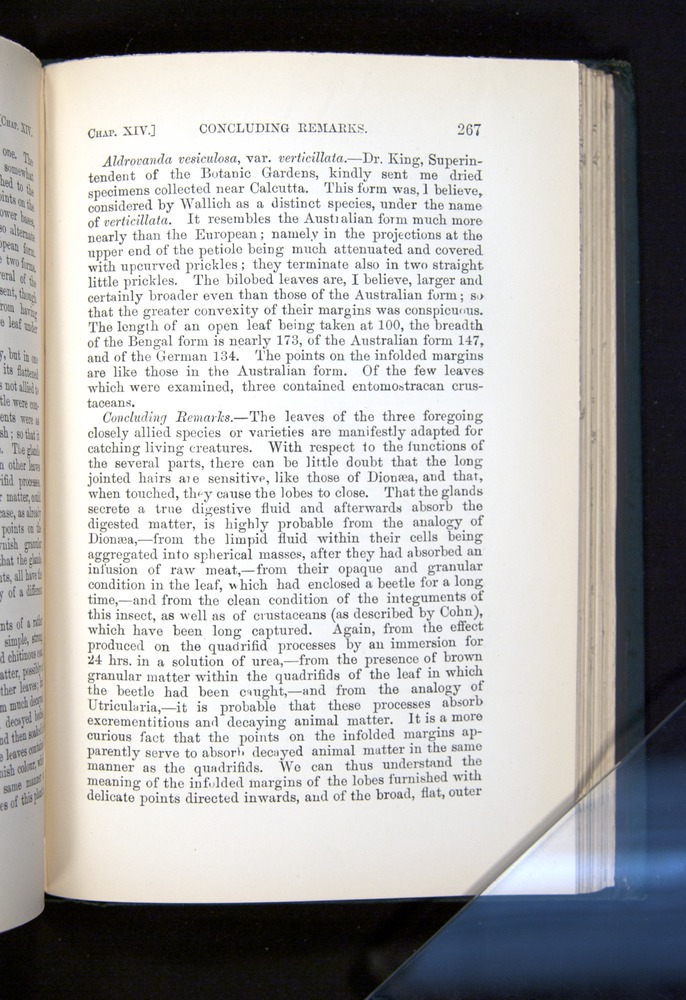 Image of Darwin-F1225-1888-267