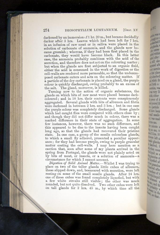 Image of Darwin-F1225-1888-274