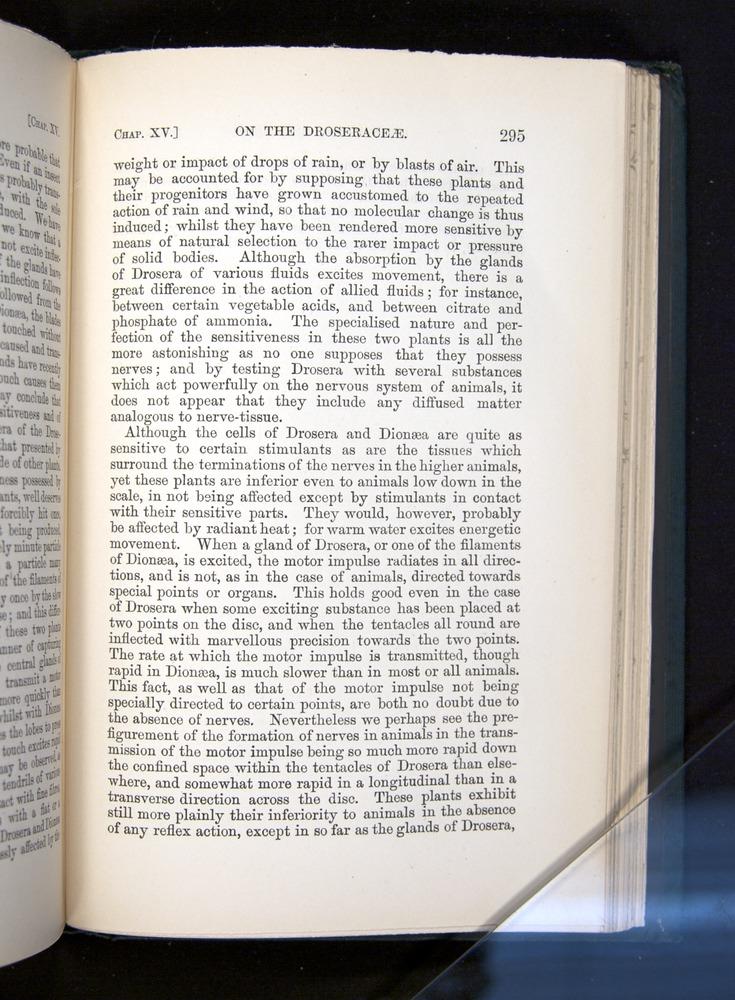 Image of Darwin-F1225-1888-295