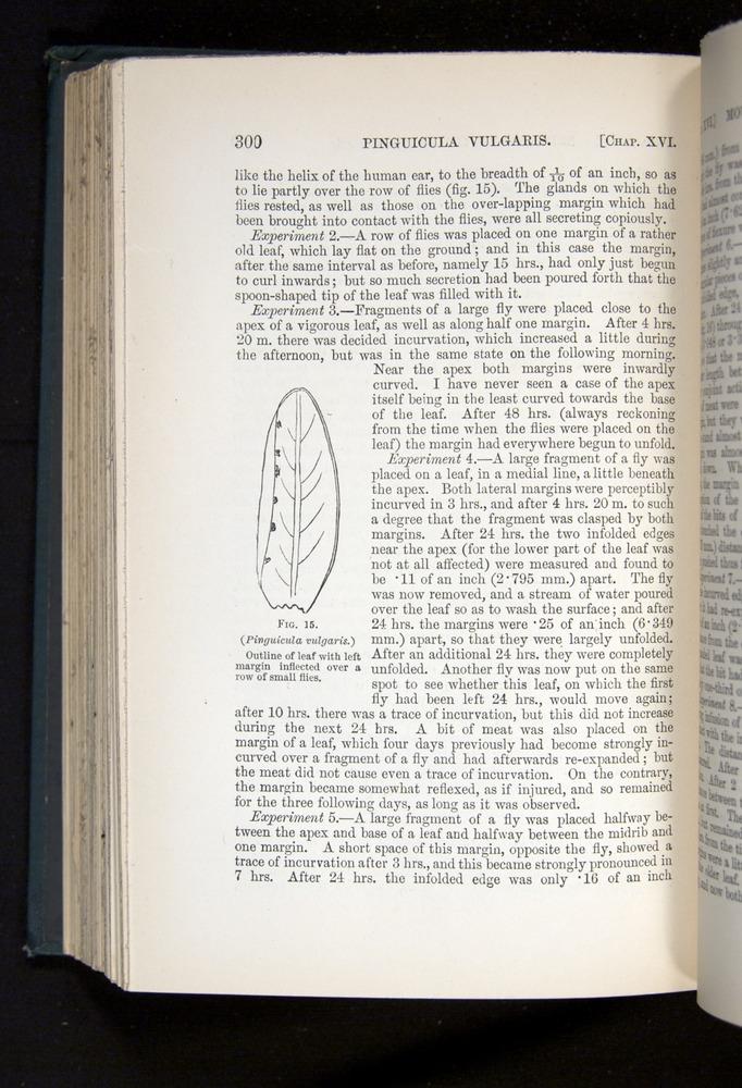 Image of Darwin-F1225-1888-300
