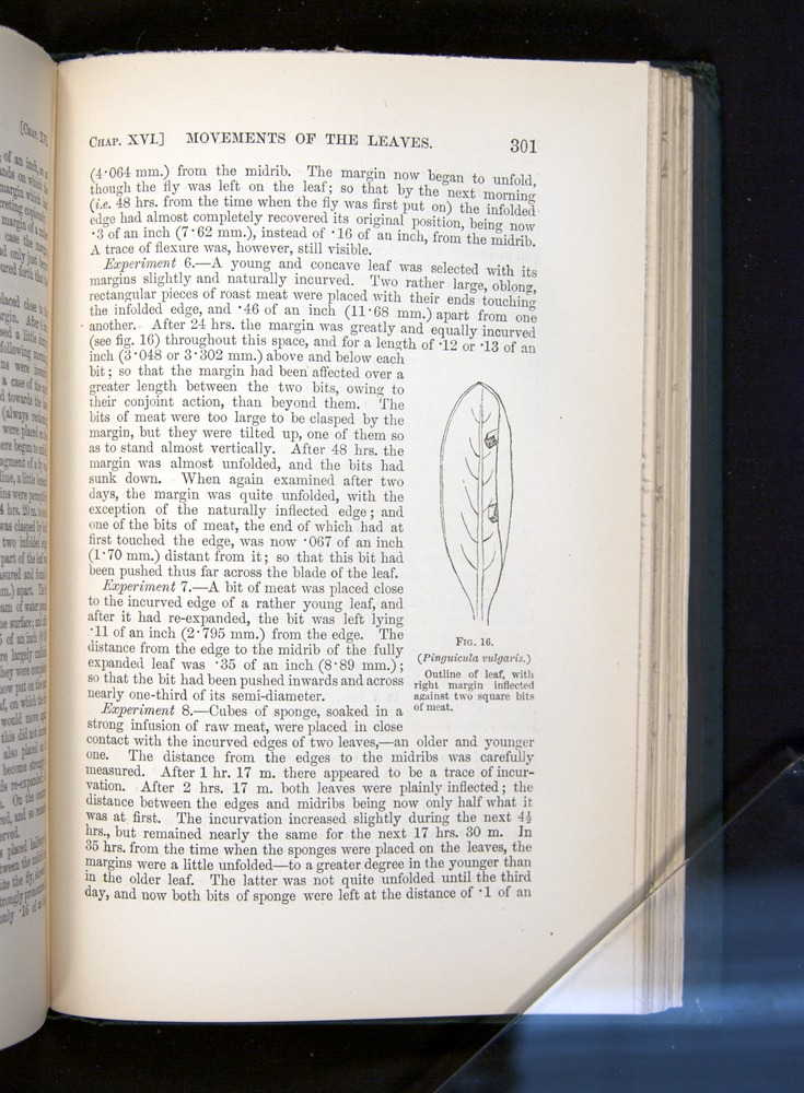 Image of Darwin-F1225-1888-301