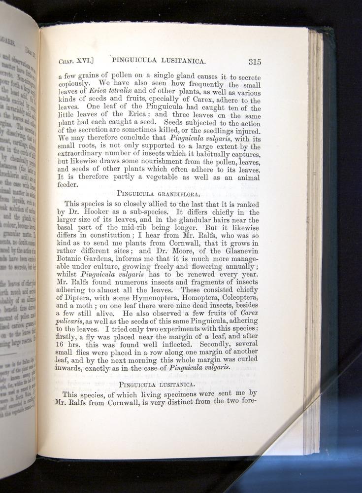 Image of Darwin-F1225-1888-315