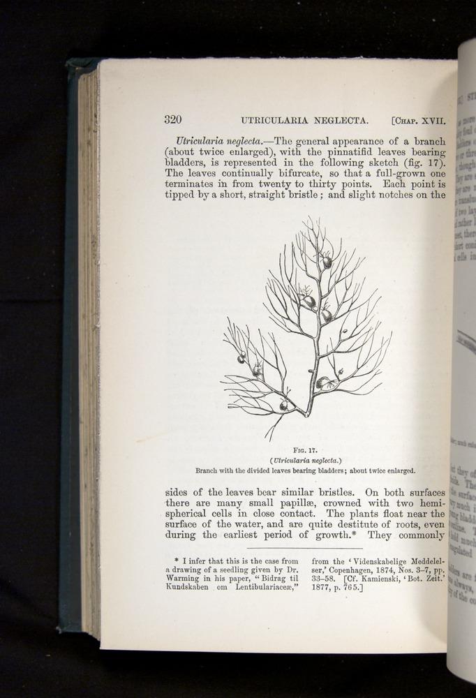 Image of Darwin-F1225-1888-320