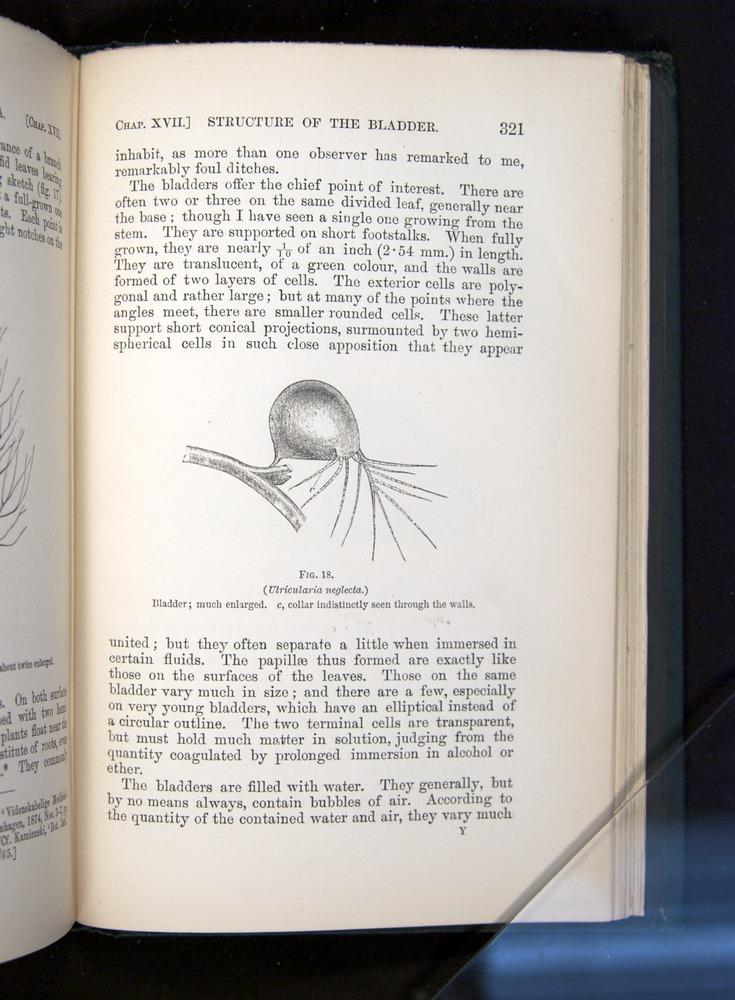 Image of Darwin-F1225-1888-321