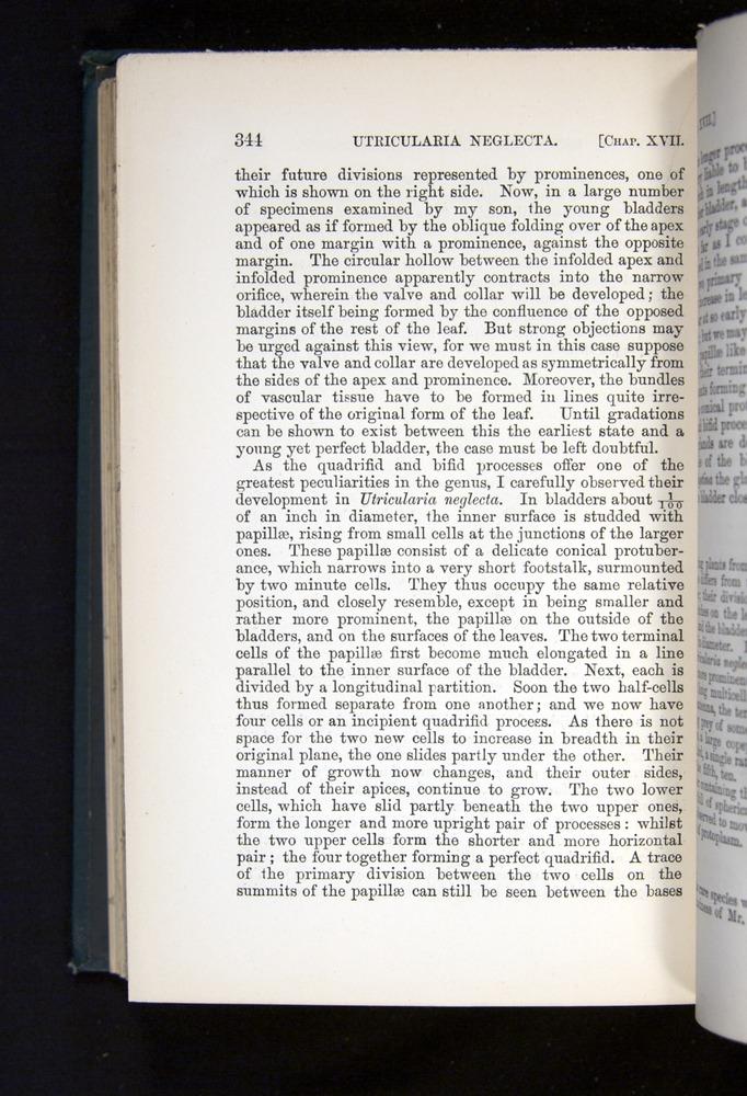 Image of Darwin-F1225-1888-344