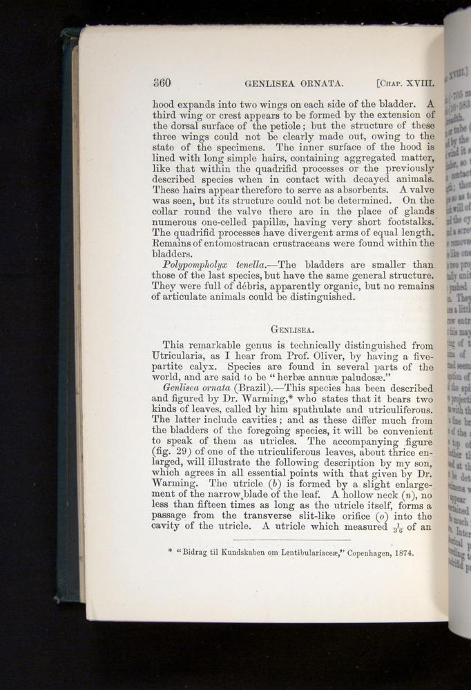 Image of Darwin-F1225-1888-360