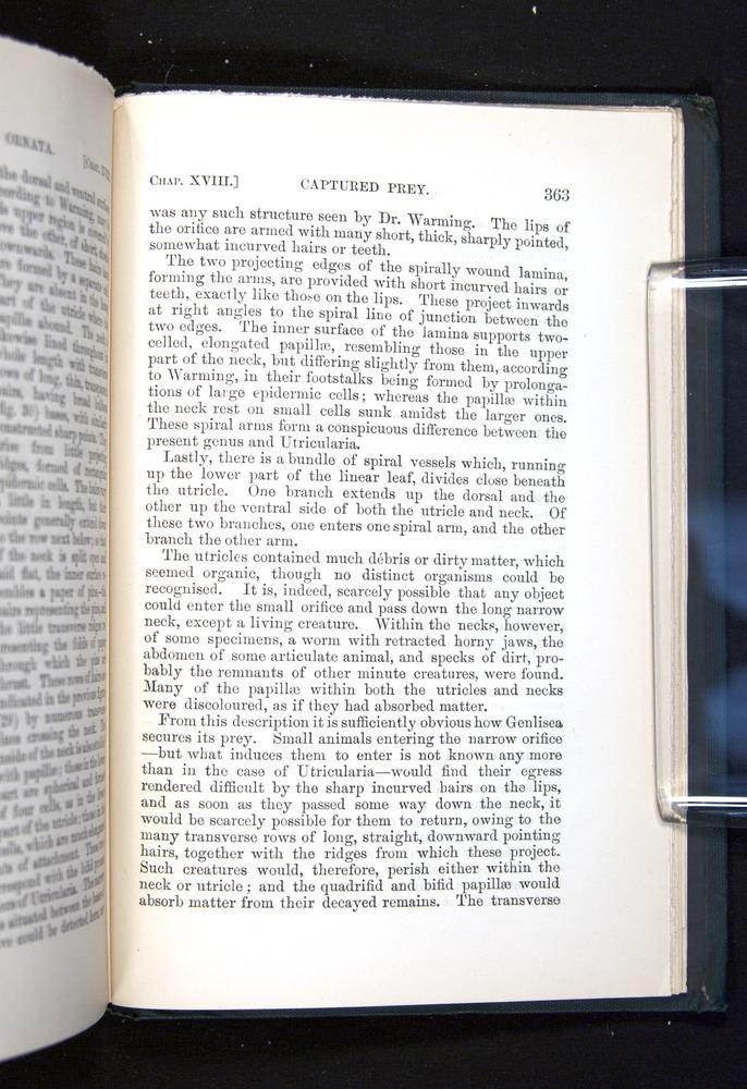 Image of Darwin-F1225-1888-363