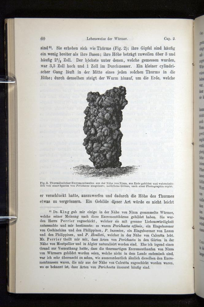 Image of Darwin-F1404-1882-060