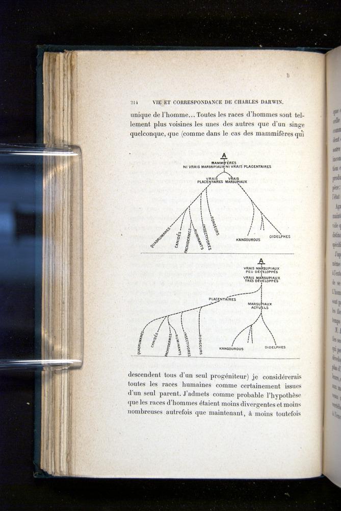 Image of Darwin-F1514.2-1888-214