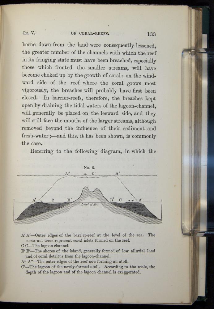 Image of Darwin-F275-1874-133