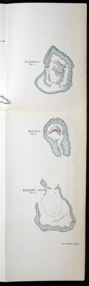 Image of Darwin-F275-1874-zzz-af2s-c